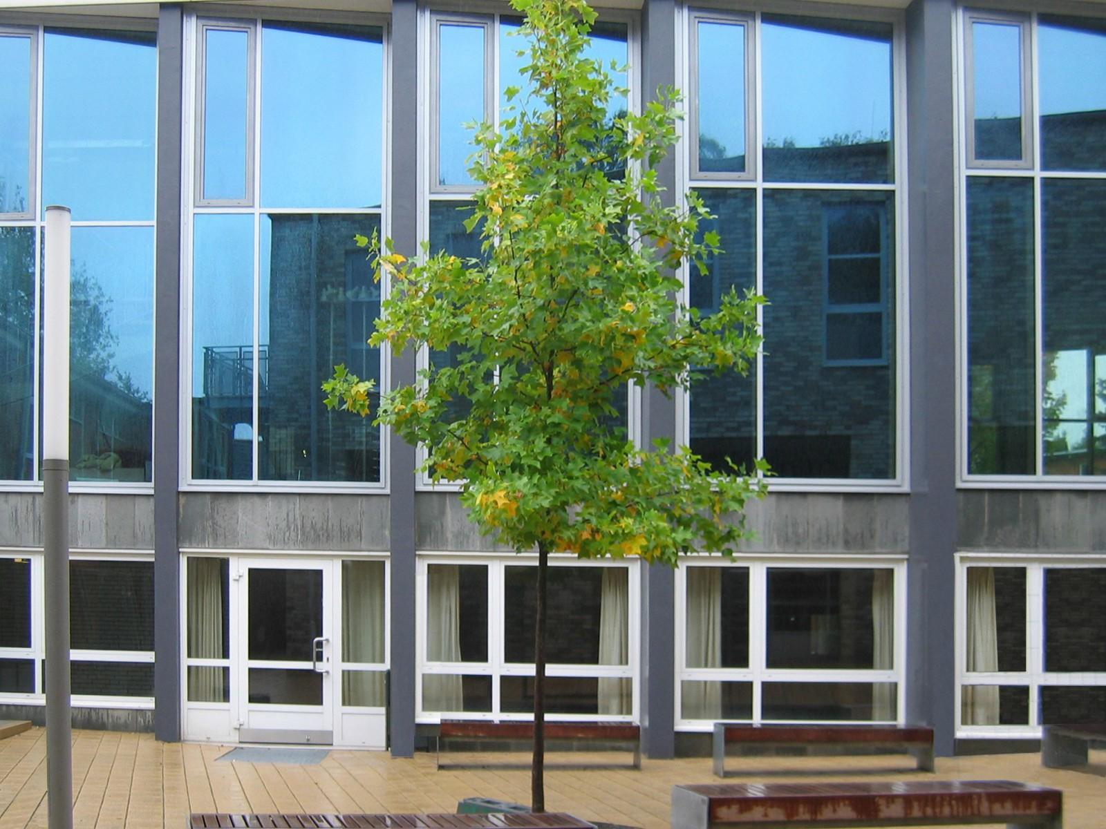 sanierung-aula-gymnasium-bondenwald-ansicht